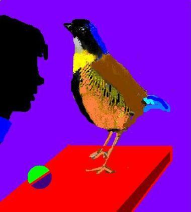 una-pittata-per-pitta-luccellino-colorato