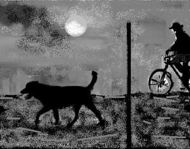 un cane di notte